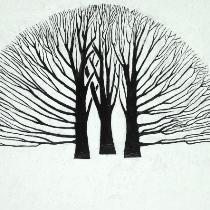 Kale Bomen 6